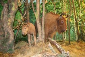 4 Автобуная экскурсия в Березинский биосферный заповедник